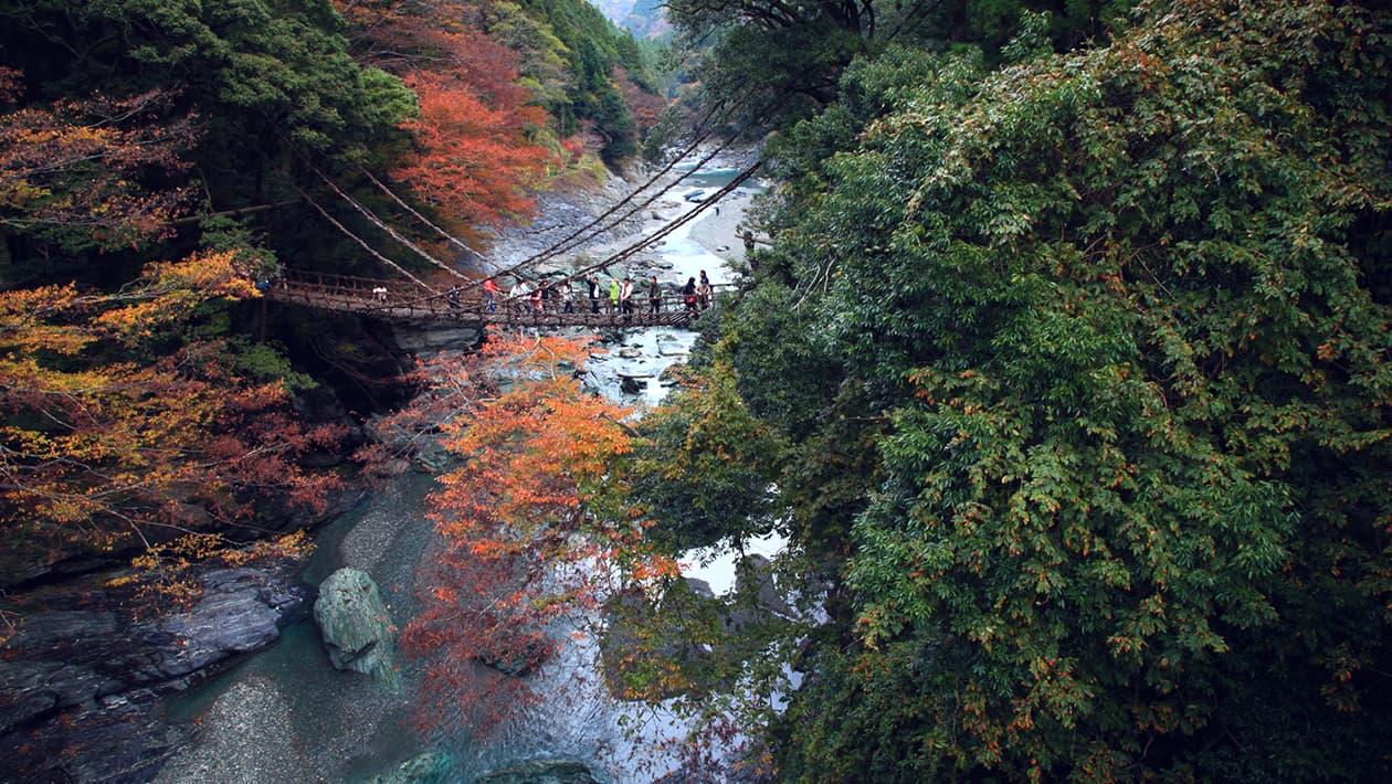 祖谷的吊桥